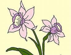 dibujos de la orquidea el araguaney y el turpial para colorear dibujo de orqu 237 dea pintado por michinita en dibujos net el d 237 a 14 04 12 a las 20 52 33 imprime
