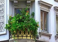 gehoelze fuer jede geh 246 lze auf dem balkon gaertnern
