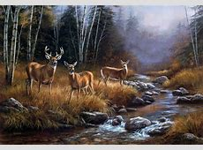 Whitetail Deer Backgrounds ·? WallpaperTag