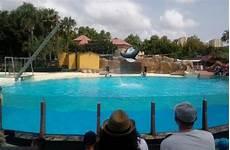 Malvorlagen Delfin Verde Faada Denunciamos A Aquopolis Por Mantener A 6 Delfines