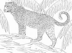 Ausmalbilder Erwachsene Leopard Kleurplaat Afrika Dieren Tiere Ausmalbilder Fr Erwachsene
