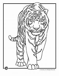 tiger coloring page woo jr activities