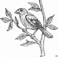 Malvorlage Vogel Auf Ast Auf Einem Ast Sitzender Vogel Ausmalbild Malvorlage
