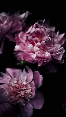 Flower Wallpaper Iphone 7 by Vintage Pink Flowers Iphone 7 Wallpaper Iphone