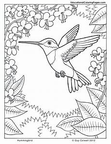 coloring pages of nature and animals 16380 74 best humming birds coloring images on coloring books coloring pages and