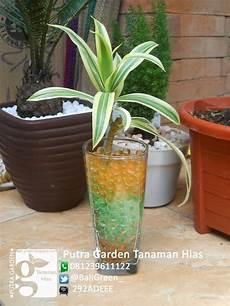 Jual Hidrogel Bening Media putra garden bali promo tanaman hias hidrogel unik untuk