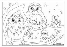 printable bird colouring pages for