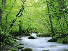 Gambar Hutan Tropis Foto Hutan Alam Fotografi Alam