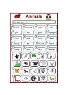 animals around us worksheets 14065 animal worksheet new 898 animal around us worksheet