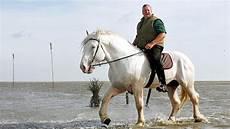 Tamme Hanken Pferd - tamme hanken mit dem ostfriesen auf tour bild 5