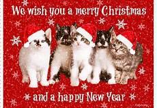 bea s book nook cat thursday merry christmas