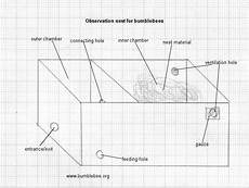 bumble bee house plans bumblebee observation nest box bumble bee how to plan