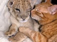 animale vanitoso 20 sweet exles of friendship between animals of
