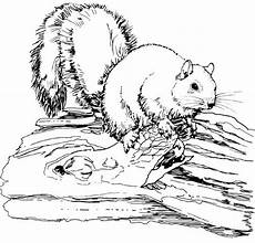 wood animals coloring pages 17194 17 best images about wood burning on deer wood burning projects and birdhouses