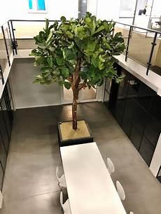Innenraumbegr 252 Nung Konferenzraum Pflanzen Fertig Bepflanzt