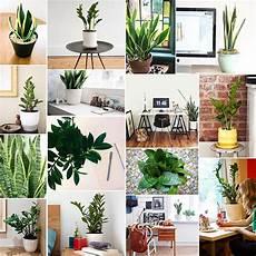 575 best office plants desk mates images on pinterest office plants bureaus and desks