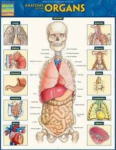 Anatomy Of The Organs Quickstudy Laminated Reference