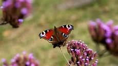 Malvorlagen Insekten Um Insektensterben Drastischer Insektenschwund In