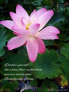 Meaning Of Lotus Flower Lotus