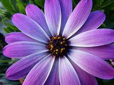 blume lila lila blume 3 by sponqi08 on deviantart