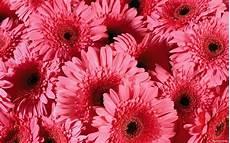 Flower Wallpaper Laptop by Flower Background 183 Free Stunning