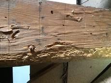 traitement capricorne prix traitement bois de charpente et boiseries contre les