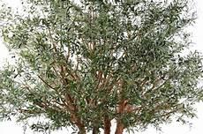 Arbre Artificiel Olivier New Tree Plante Pour Int 233 Rieur