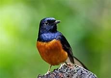 70 Gambar Burung Dari Berbagai Negara Termasuk Indonesia