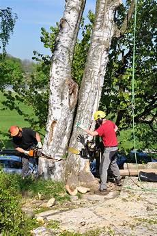 Baumk 246 Nig Baumpflege Spezialf 228 Llungen Gutachten