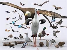 how to make a 3d bird model 3d birds critters model