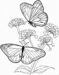Malvorlagen Blumen Und Schmetterling 2 Gr Schmetterlinge Auf Blumen Ausmalbild Malvorlage Tiere