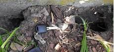 woran erkenne ich ein rattenloch garten maus ratten