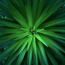 green flower iphone wallpaper hd retina