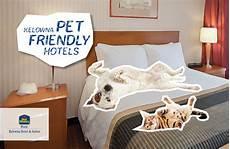 pet friendly kelowna hotel s ultimate guide hotel rooms suites in kelowna bc best