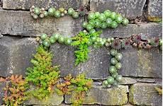 Kosten F 252 R Eine Gartenmauer 187 Kostenfaktoren Preisbeispiel