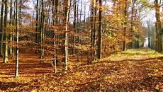 Gambar Pohon Menanam Jejak Sinar Matahari Daun Alam