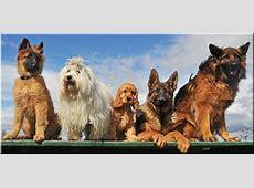 Hunderassen A Z   Dogland