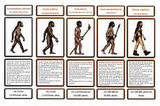die evolution des menschen kerstins krabbelwiese entwicklung zum sapiens