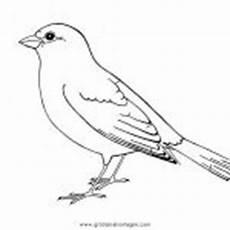 Malvorlage Vogel Spatz V 246 Gel Malvorlagen Zum Ausmalen F 252 R Kinder