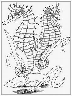 realistic seahorse coloring pages for realistic
