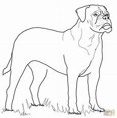 bullmastiff coloring page free printable coloring pages