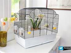 gabbie usate per canarini how to prepare your bird cage for brooding season
