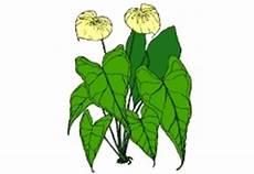 Malvorlagen Jahreszeiten Kostenlos Runterladen Ausmalbilder Blumen Jahreszeiten