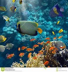 koralle und fische stockfoto bild sturzflug wasser