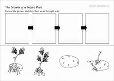 plants sequencing worksheets 13629 potato plant growth sequencing worksheet sb9782 sparklebox on the farm