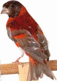 el cardenalito simbolo del estado lara turismo en el estado lara