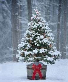 weihnachtsbaum online ab wann stellt man den weihnachtsbaum raus