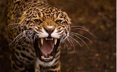 Pic Of Jaguar by Jaguar Wallpapers Hd Wallpapers Id 11887