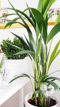 welche pflanzen sind ungiftig f 252 r katzen ungiftige