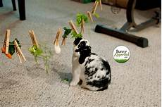 bunny logic 101 rabbits are smart bunny approved